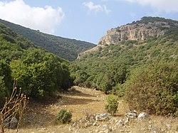 A vegetação de tipo mediterrânico no Monte Carmelo.