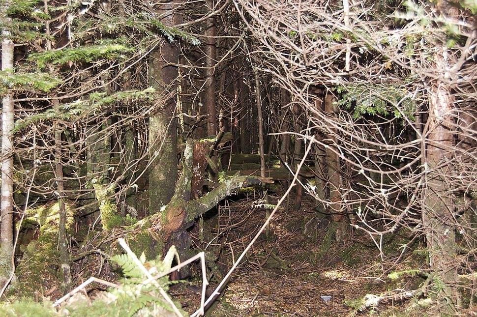 Mount Mitchell Forest Floor