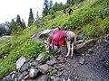Mountain hiking (very technical).jpg