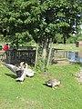 Muggensturm - Familienfreundlicher - Tierpark - panoramio.jpg