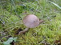 Mushroom (1467446673).jpg