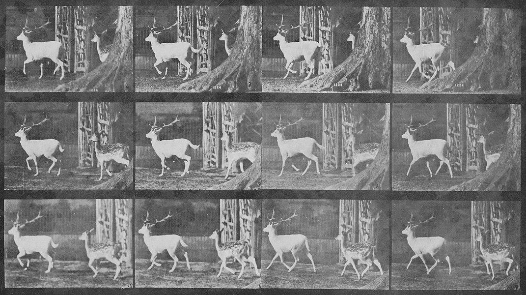 eadweard muybridge - image 9
