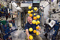 NASA astronaut Scott Kelly corrals the supply of fresh fruit that arrived on HTV-5.jpg