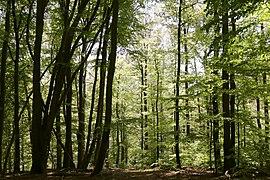 NSG-00414.01 Metzgergraben und Krone Path.jpg