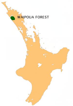 Waipoua Forest - Location of Waipoua Forest