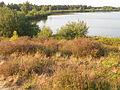 Nationaal Park De Maasduinen (6).JPG