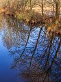 Nationaal Park Weerribben-Wieden. Spiegeling in het water 02.jpg