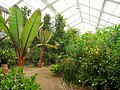National Botanic Garden of Belgium (Meise) - IMG 4432.JPG
