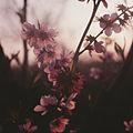 New Spring (1972). (21040777691).jpg
