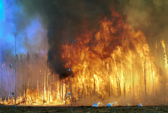A line of trees completely engulfed in flames. Towers with instrumentation are seen just beyond the fire's reach.