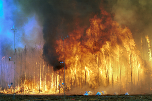 English: Northwest Crown Fire Experiment, Nort...