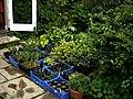 Nursery - Flickr - peganum (23).jpg