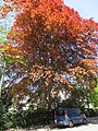 Nyvej (Frederiksberg) - tree.jpg