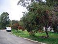 OIC carine caravan park 2.jpg