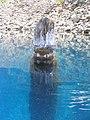 Old Man of the Lake - Crater Lake National Park - NPS 8.jpg