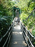 On the suspension bridge (7987410308).jpg