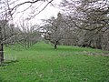 Orchard By Humber Brook - geograph.org.uk - 1235177.jpg