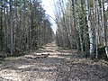 Orekhovo-Zuyevsky District, Moscow Oblast, Russia - panoramio - citrin (7).jpg