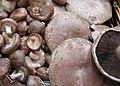Organic mushrooms (699972726).jpg