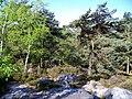 Ormoy-Villers (60), exemple de paysage dans le bois du Roi.jpg