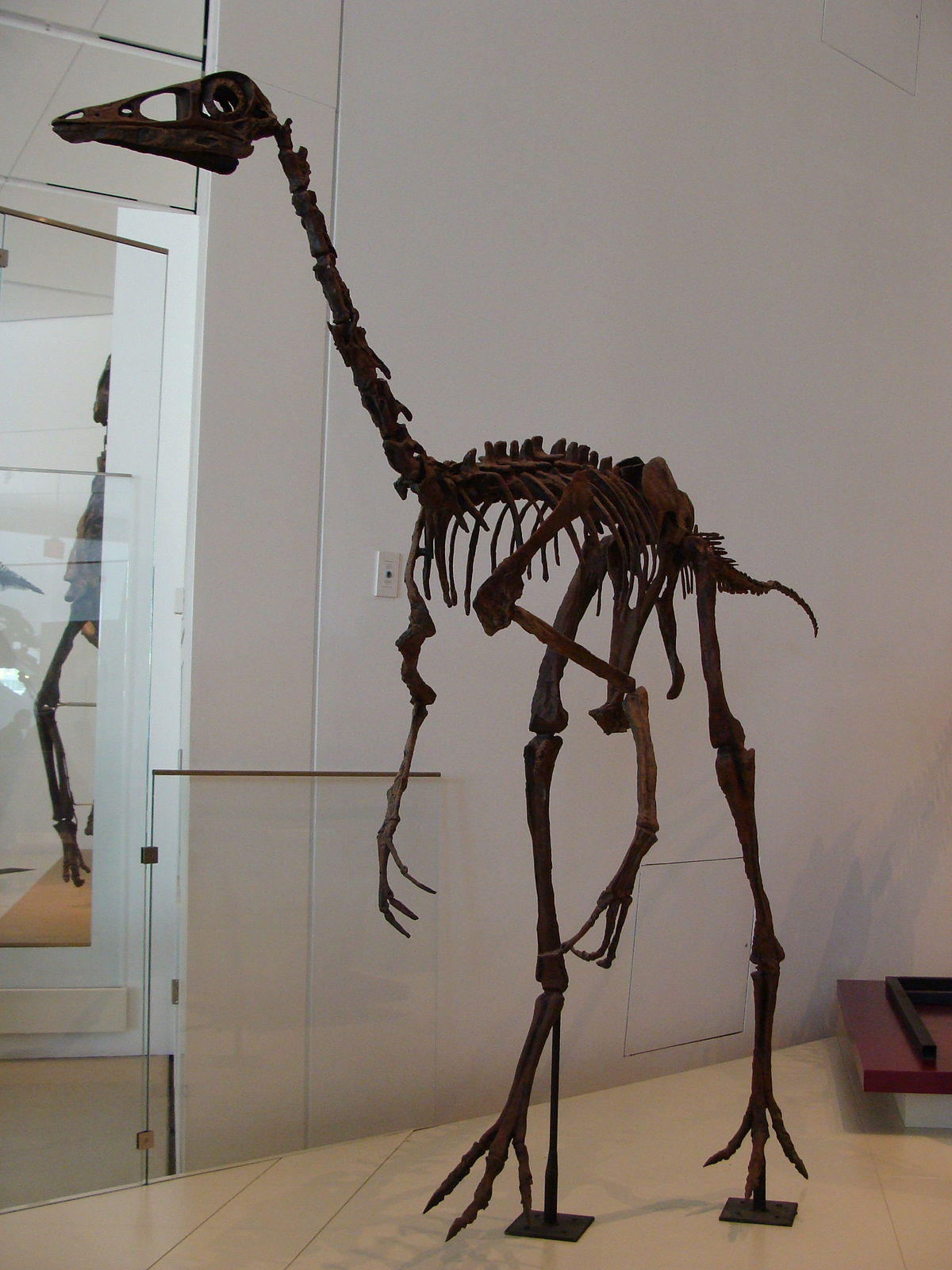 Photos: Ornithomimus
