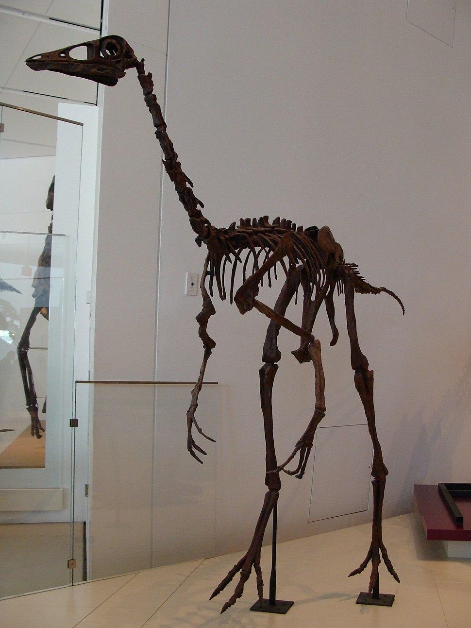 OrnithomimusROM