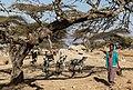 Oromia IMG 5251 Ethiopia (39633817441).jpg