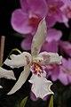 Orquídea - panoramio.jpg