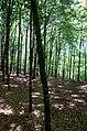 Osbecks bokskogar - KMB - 16001000180404.jpg