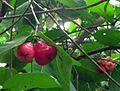 Other unknown fruits in Vietnam.jpg