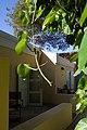 Our Rooms, Hotel Kura Hulanda, Willemstad, Curaçao (4383508505).jpg