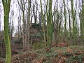 Overgrown Remains of Horsley Castle - geograph.org.uk - 299788.jpg