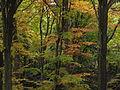 Přírodní rezervace Malý Blaník, koruny stromů.JPG