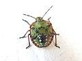 Painted Bug.jpg