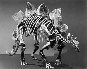 Dinosaurier-Gehirn datiert Manhattan Sendung Halbpreis-Haken