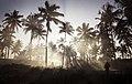 Palm Tree Stroll (10558719263).jpg