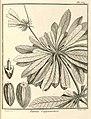 Pamea guianensis Aublet 1775 pl 359.jpg