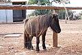 Paphos Zoo, Cyprus - panoramio (10).jpg