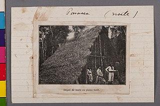 Parana (Mate) Parana - Dépot de Maté En Pleine Forêt
