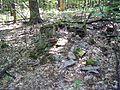 Parc-nature du Bois-de-l-ile-Bizard 23.jpg