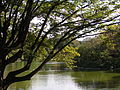 Parc Montsouris le lac.JPG