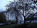 Paris 75018 Place Jean-Baptiste-Clément Trees.jpg