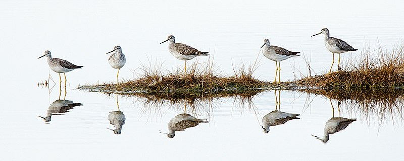 File:Parker River National Wildlife Refuge, MA. Credit- Matt Poole-USFWS (11805152665).jpg
