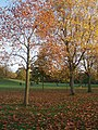 Parkland Kensington Gardens - geograph.org.uk - 1574969.jpg