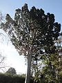 Parque Pereyra Iraola - Arbol de Cristal.jpg