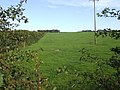Pasture land by Sampson Cross - geograph.org.uk - 523985.jpg