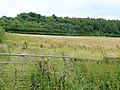 Pasture west of Blake's Wood - geograph.org.uk - 1439683.jpg
