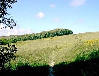 Worthing Downland Estate - Image: Path ascending Mount Carvey geograph.org.uk 868845