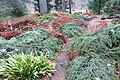 Pathway - Botanischer Garten, Dresden, Germany - DSC08776.JPG