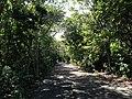 Pathway - panoramio (7).jpg
